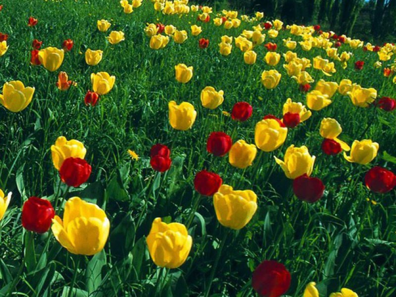 Цветник желто красный