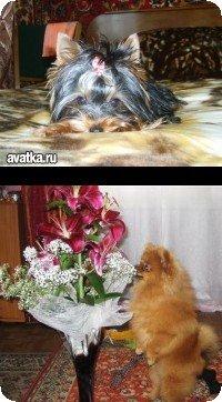 Буря Пёс
