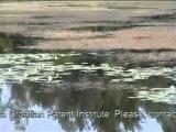 Bumble lure / Croatian Egg testing video