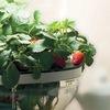 Домашний сад. Гидропоника и здоровое питание