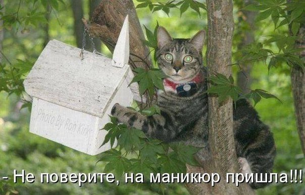 Кошачий маникюр
