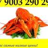 """Живые раки Казань """"РАКИ 116"""""""