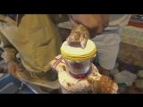 Как змеиный яд действует на кровь