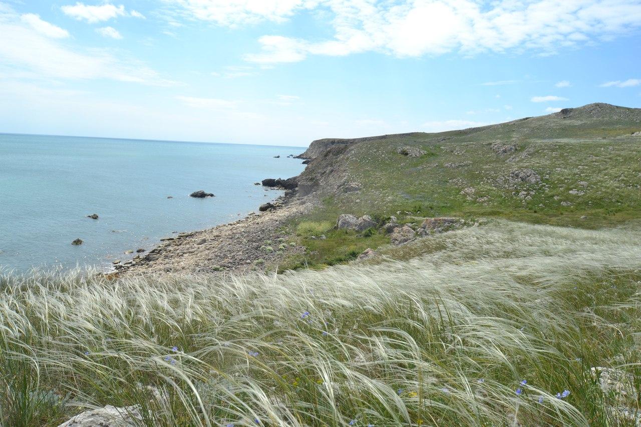 Ковыльная степь на берегу Черного моря