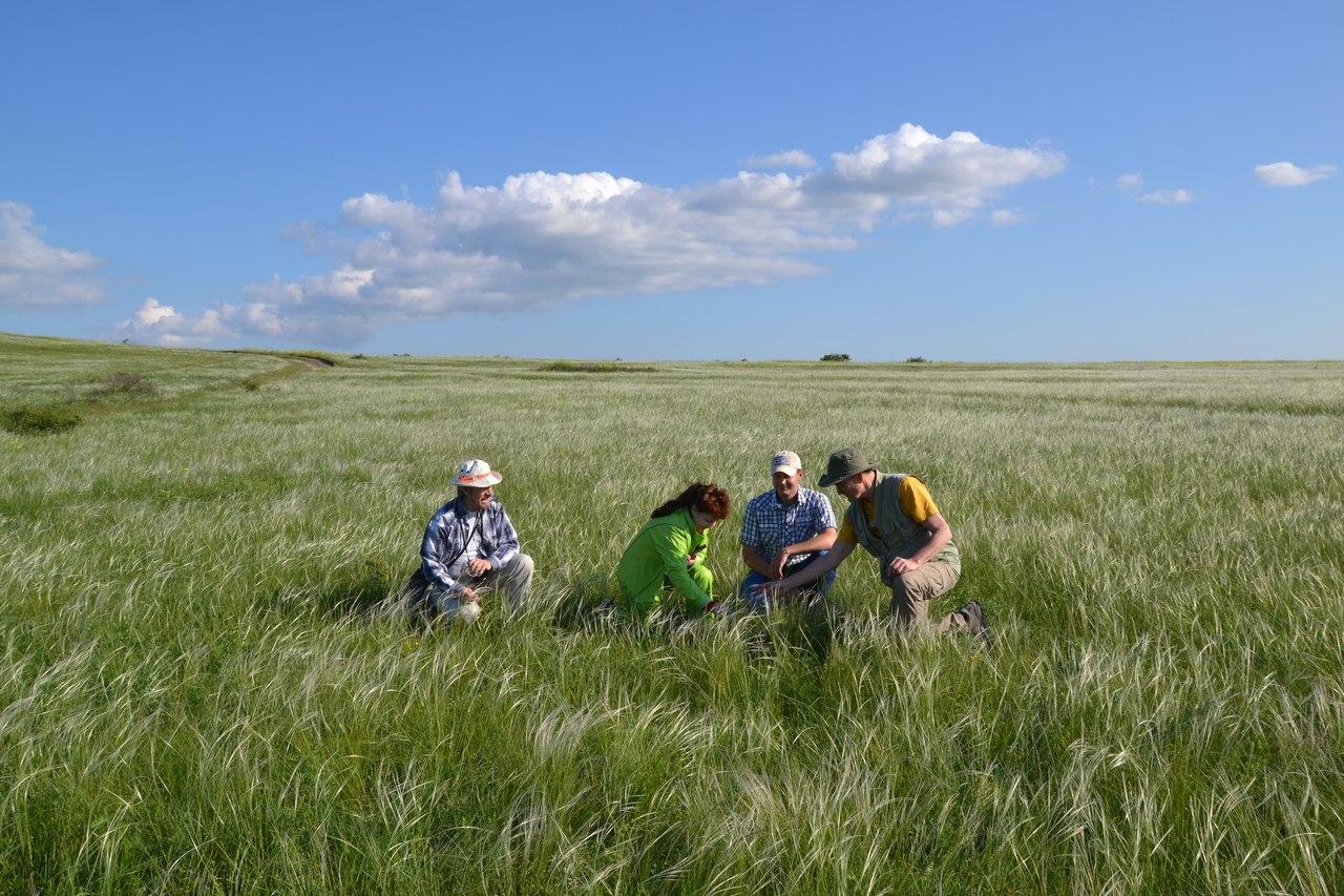 Ковыльная степь на севере Керченского полуострова