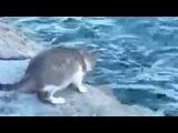 Кошка на пруду рыбу ловит
