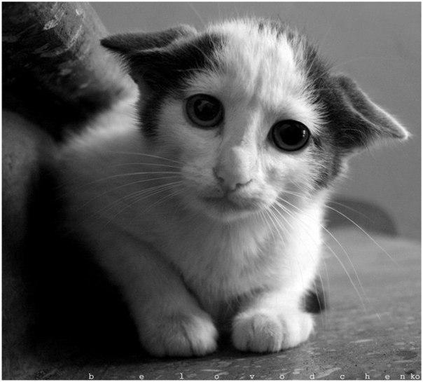 Картинки грустные котята с надписями, стрекоза