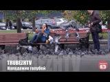 Нападение голубей (розыгрыш)  Pigeons attack people (Russian prank)