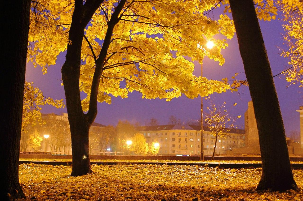 Яндекс золотой дождь 11 фотография