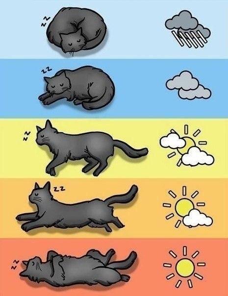 Определяем погоду по поведению кота