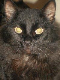 Loki Cat, 2 июля , Ревда, id25273839