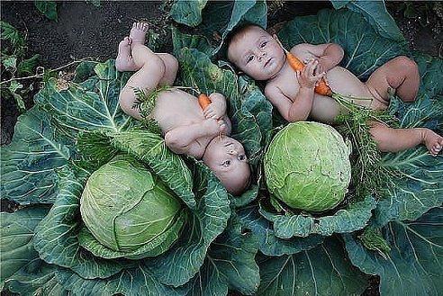 Найти ребёнка в капусте совсем не сложно, а вот найти капусту на его воспитание - вот это задача!!!