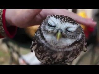 Массаж головы птицы совы няшки няшные животные приколы с животными няшечки сова.