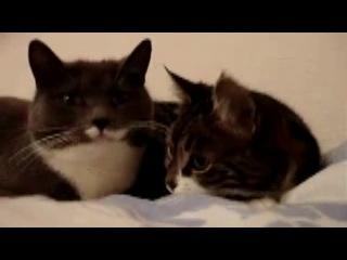 Самое милое видео в мире! Кошка говорит с котом. Приколы про кошек. Смешные кошки.+#$@*.