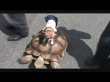 Чихуахуа катается на черепахе