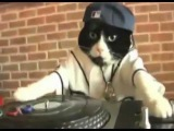 His Majesty the Cat DJ (Dubstep Mix)