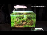 The Art of the Planted Aquarium 2015 - Scaper's Tank (Nano) category, part 2