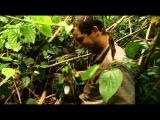 Ultimate Survival Bear Grylls direction in the jungle / Выжить Беар Гриллс направление в джунглях