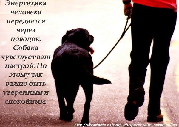 правила во время прогулок