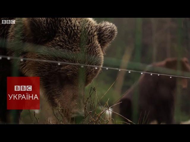 Врятовані ведмеді України