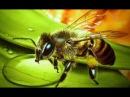 Подкормка пчел - первая сезонная работа