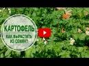 Картофель выращиваем из семян? 🌟 Мастер класс эксперта hitsadTV по выращиванию картофеля.