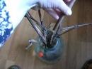 Размножение винограда черенкованием