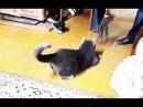 Самые смешные кошки для детей видео Приколы с животными и котами 2018 5 Котята топ Без монтажа