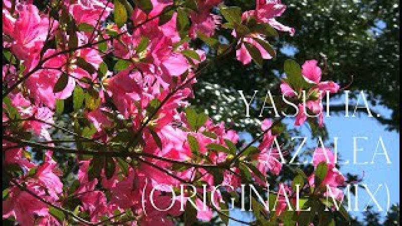 Yasuha. - Azalea (Original Mix) Music Video※Free Download【Melodic Progressive House】RockRiverRecords