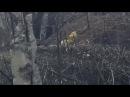 Снайпер Новороссии уничтожил двух укрофашистов