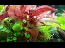 Aquael leddy set 60 akwarium roślinne 54l 3 mc po zalaniu 4K