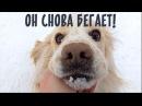 Счастливая история бездомной собаки-инвалида. Челлендж выполнен! :)
