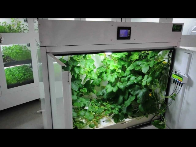 The Producer Grow Box for Large Yields | BCNL