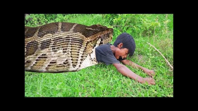 Удивительный умный маленький мальчик поймал самую большую змею, используя пластиковую чистую ловушку