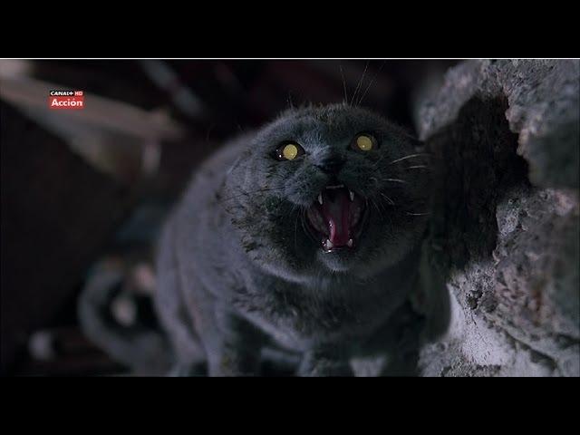 Кладбище Домашних Животных 2. Мертвый кот Черч возвращается домой.