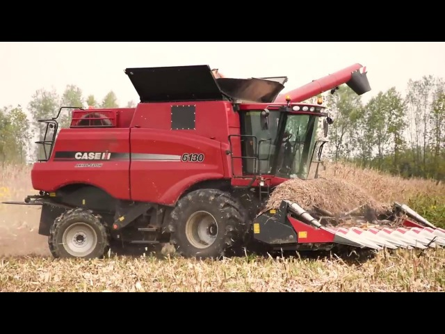 CORN HARVESTING 2017 | Case IH 6130 Axial-Flow® 8 Row Corn Head