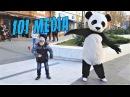 Видео с животными Приколы с животными 2018 Смешные животные 3 МИНУТЫ ПОЗИТИВА UHD