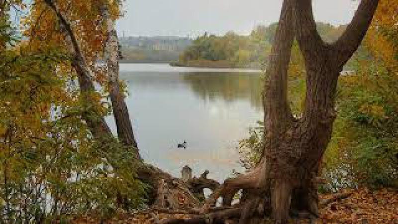ВИА Калинка - Тополь - жёлтые листья