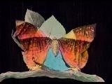 Métamorphose du papillon (1905) [silent short film]