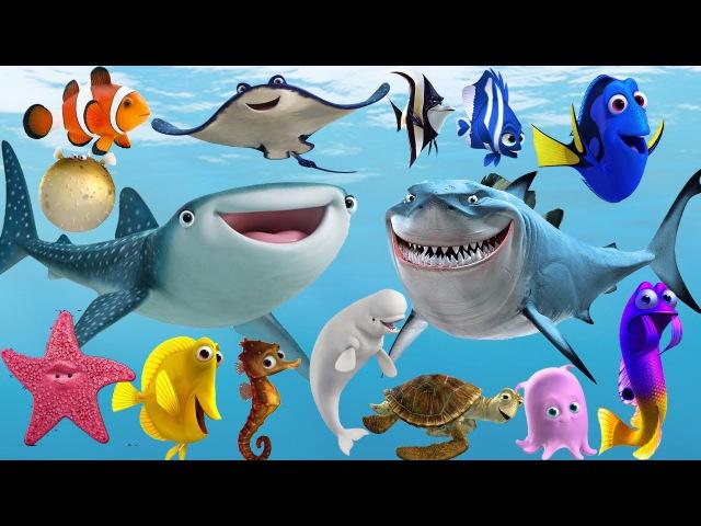 Learn Sea Animals NEW | Disney Pixar Finding Dory, Nemo Cartoon For Kids - HandPlayTV for kids