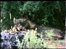 050 El Hombre y la Tierra - El Lobo Cazador Social.