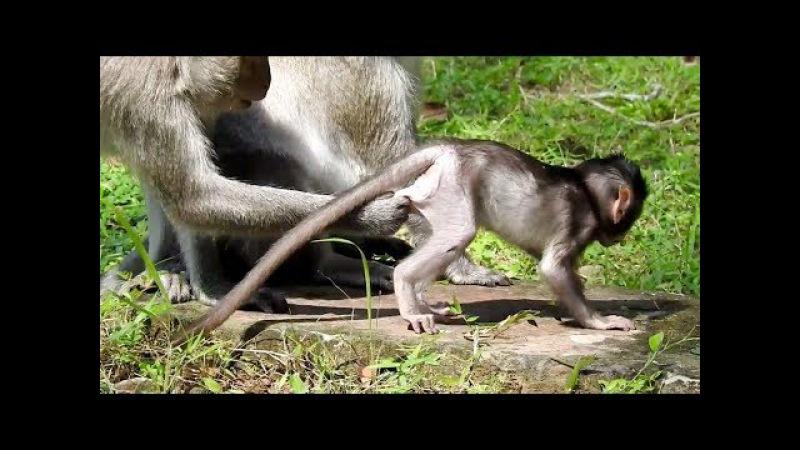 She playing with lovely baby monkey, Monkeys 1020 Tube BBC