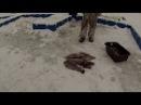 Рыбалка в Подмосковье. Платная рыбалка в КФХ Прудцы.