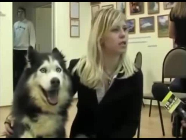 Девушка с псом любит прыжки · coub, коуб
