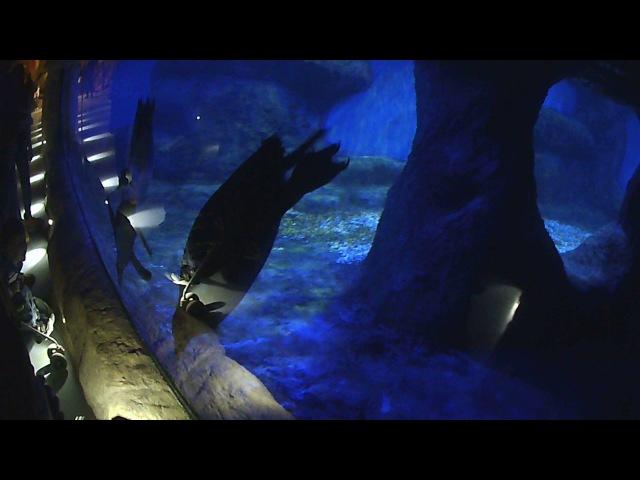 Пингвины, как из Мадагаскара, Крокус сити океанариум