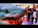 РЫБАКИ БОЯТСЯ ЛОВИТЬ ЭТИ ВИДЫ РЫБ БЕЗУМИЕ СОМЫ УБИВАЮТ ЛЮДЕЙ Вот это рыбалка 2018 Ты не поверишь РЫБАКИ НЕ ПОНЯЛИ ЧТО ЭТО ЗА ЗВЕРЬ МОНСТР Вот это рыбалка 2018 ты не поверишь Очень много рыбы ЭТОТ РЫБАК ГОВОРИЛ НИКТО ДО ТАКОГО НЕ ДОДУМА