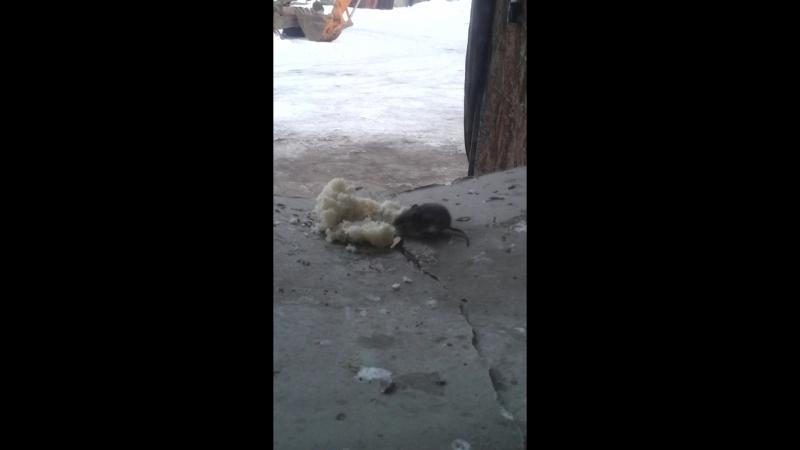 голод не тетка.днём птицы едят а ночё мыши и крысы .
