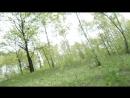 В лесу 11.05.17