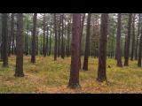 Прогулка по осеннему лесу. Красота