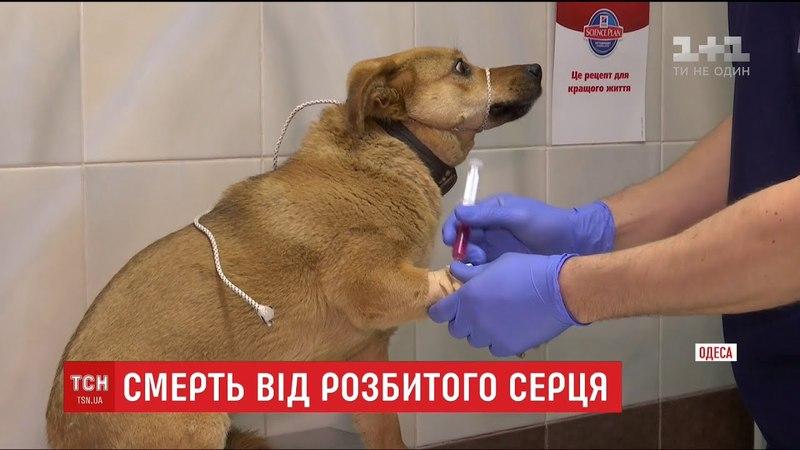 Єдиний друг в Одесі чоловік помер після того, як побачив отруєним улюбленого пса